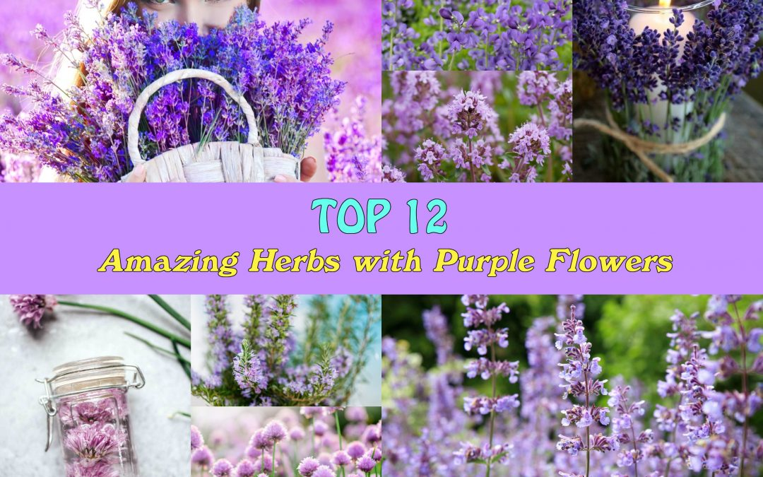 Top 12 Amazing Herbs with Purple Flowers