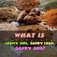 What Is Loamy Soil, Sandy Loam, Sandy Soil?