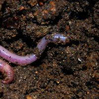 Improving Your Soil Organically