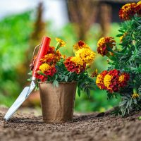 How To Grow A Blooming Flower Garden: Beginner's Guide