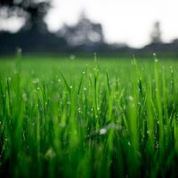 A Simple Lawn Maintenance Guide for Beginners in Omaha