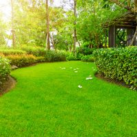 6 Steps to Choose Garden Maintenance Services in Northern Beaches