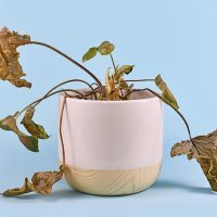 Stop Your Plants From Dying With These Three Powerful Tips